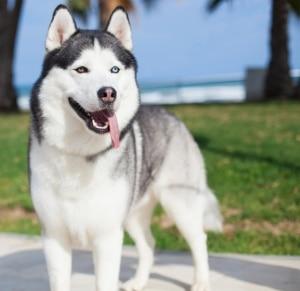 walking dogs company